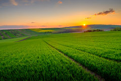 Green field at beautiful sunset at Soth Moravia Royalty Free Stock Photography