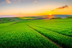 Green field at beautiful sunset at South Moravia Royalty Free Stock Photo