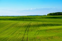 Green field and blue sky. Green field in Belarus. Minsk Stock Photos