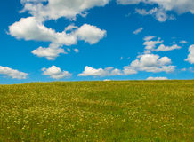 Green field with blooming flowers Stock Image