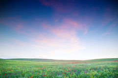 Green field with blooming flowers. And blue sky Royalty Free Stock Photos