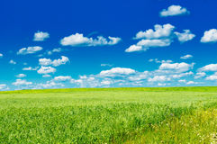 Green field with blooming flowers and blue sky Stock Photos