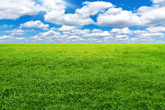 Green field and blue cky Royalty Free Stock Photography