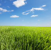 Green field and blue cloudy sky Royalty Free Stock Photography