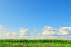 Green field and blue cloudy sky Royalty Free Stock Image