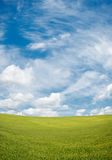 Green field and blue cloudy sky background Stock Photography