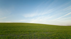 Green field and Blue cloudy Sky Environment Royalty Free Stock Photo