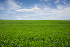 Green field, blue skies, white clouds in spring. Horizontal composition Royalty Free Stock Photos