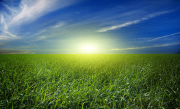 Green field and blue sky. Scenic view of green field under blue sky and cloudscape Royalty Free Stock Photography
