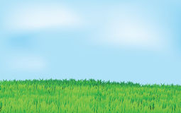 Green field and blue sky. Landscape vector, in horizontal format Stock Photos