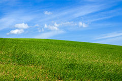 Green field with blue sky Stock Image