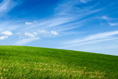 Green field with blue sky. And clouds in the background Stock Photos