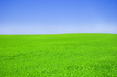 Green field and blue sky. Picture of green field and sky in summer Stock Photo