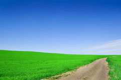 Green field and blue sky. Picture of green field and sky in summer Royalty Free Stock Photo