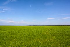 Green field and blue sky.  royalty free stock photography