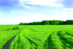 Green field and blue sky. Picture of green field and sky in summer Royalty Free Stock Image