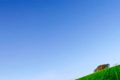 Green field and blue sky. A portion of green field with a lone tree at the background and a blue sky Stock Photography