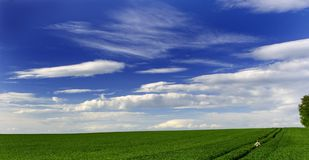 Green Field And Blue Sky. With clouds to horizon Royalty Free Stock Photos