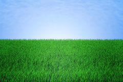 Green field with a blue sky Stock Image