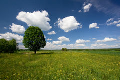 Green field and blue sky 17. Royalty Free Stock Photo