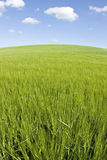 Green field blue sky. On hill Royalty Free Stock Images