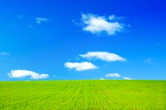 Green field and blue sky. Perfect green field and blue sky with white fluffy clouds Royalty Free Stock Image