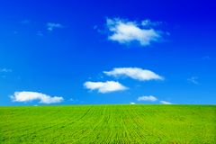 Green field and blue sky. With white fluffy clouds Stock Images