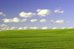 Green Field and Blue Sky. Green Field and Blue Cloudy Sky. Spring time Stock Photos