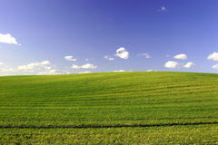 Green Field and Blue Sky. Green Field and Blue Cloudy Sky. Spring time Royalty Free Stock Images