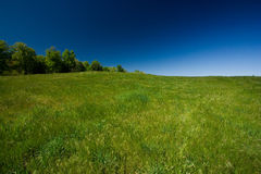 Green field and blue sky Stock Image