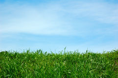 Green field and a blue sky. With clouds Royalty Free Stock Images