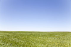 Green field, blue sky. Landscape Royalty Free Stock Photography