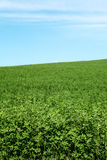 Green field and blue sky. Picturesque green field and blue sky whit shadow Royalty Free Stock Photo