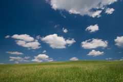 Green field and blue sky. With cumulus clouds stock image