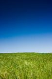 Green field and blue sky Stock Photos