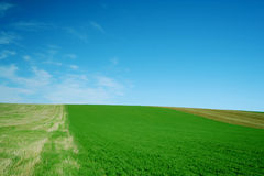 Green field and blue sky. Landscape - green field and blue sky 6 Stock Photo