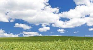 Green field, blue sky. Stock Photo