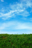 Green field and a blue sky Stock Photography