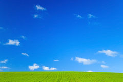 Green field and blue sky. With white fluffy clouds Royalty Free Stock Images