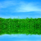 Green field and a blue sky Royalty Free Stock Image