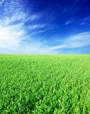 Green field and blue sky. With beautiful clouds Royalty Free Stock Photos