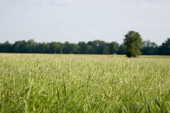 Green field, blue sky royalty free stock image
