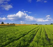 Green field with blue sky Stock Photo