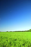 Green field and blue sky. Scenic view of green field in countryside with blue sky background Royalty Free Stock Photo
