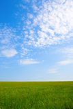 Green field and blue sky. For background Royalty Free Stock Photo