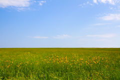 Green field and blue sky. For background Royalty Free Stock Photos