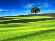Green field with the blue sky Stock Image
