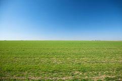 Green field blue sky Stock Images