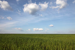 Green field and blue sky. With clouds stock image