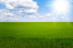 Green field and blue sky. Green field against a beautiful sky and clouds Stock Images